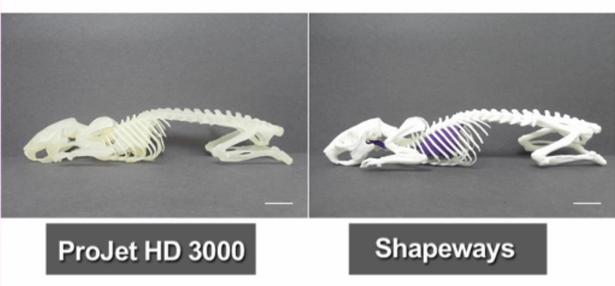 3D Printed Pets Comparison